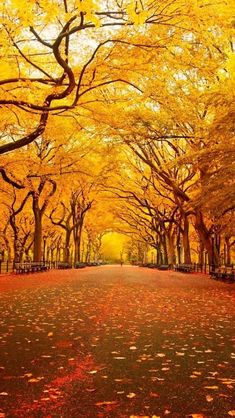 Yellow Canopy, Central Park, New York City