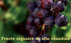 Fructe proaspete de afin canadian Gardening, Farm Gate, Lawn And Garden, Horticulture