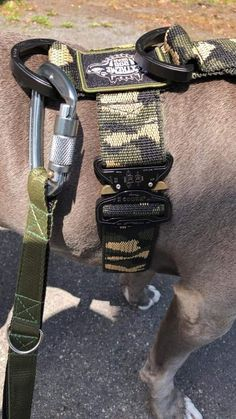 """Over the years, having a passion for working dogs, we evolved into a new brand and business named """"Extreme Dog Gear"""" thus providing sport and service dog gear. After a period of time, we came to the conclusion that law enforcement and military had more specific needs for a higher level of quality in their equipment. Military Working Dogs, Military Dogs, Military Police, Tactical Dog Gear, Tactical Dog Harness, Lock Style, Service Dogs, Law Enforcement, Gears"""