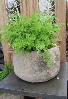 pretty fern and rustic container