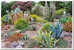 Succulents and More: Mendocino Coast Botanical Gardens, part 3