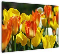 Tulpen in oranje, gele en witte kleuren van de Kracht en Macht