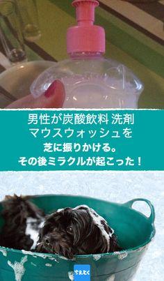 食器などを洗うのに使う洗剤。実は洗剤にはこんな隠れた使用方法があるんです。 #台所用品 #キッチン #洗剤 #便利な使い道 #掃除 #害虫駆除 #ペット #ガーデニング