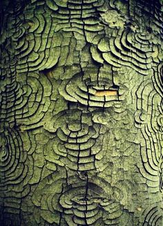 Texture and pattern: every piece of tree bark is an expression of the tree. Organic Forms, Natural Forms, Natural Texture, Patterns In Nature, Textures Patterns, Camo Patterns, Print Patterns, Art Grunge, Art Texture