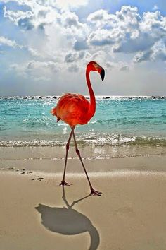 Pink Flamingos # (Розовый фламинго)