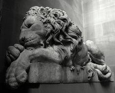 Lion Love. British kinship.