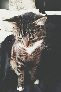 looks just like my cat!