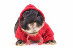 Bunday: Hare With A Hoodie!