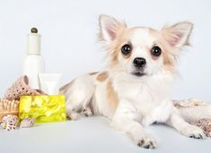 Common Skin Problems in Dogs #DogCare #PetTips