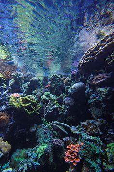 Long Beach Aquarium Coral - Long Beach, California