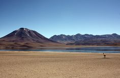 Laguna Chaxa Chile