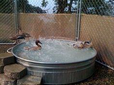 nice little duck pool