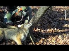 www.365downandout.com  Hunting Video (Team 365 Hunting trailer) HANK WILLIAMS  A COUNTRY BOY CAN SURVIVE