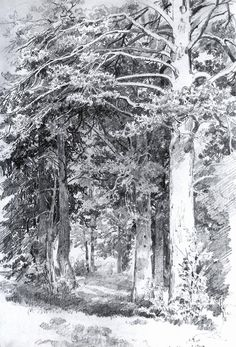 Drawing the Landscape: Master Drawings Tree Drawings Pencil, Landscape Pencil Drawings, Landscape Sketch, Forest Sketch, Forest Drawing, Nature Drawing, Tree Sketches, Drawing Sketches, Drawing Ideas