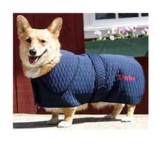 Thermo Manager Dog Coat - Dog Blankets from SmartPak Equine