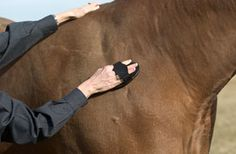 15 Ways to ease winter grooming. Cold temperatures and longer coats can complicate grooming at this time of year. Here's how you can make the job easier. Horse Grooming, Grooming Kit, Horse Stables, Horse Barns, Winter Horse, Horse Care Tips, Horse Training, Training Tips, All About Horses