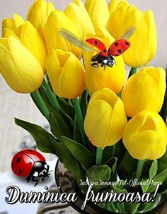 Florile sunt ca mintea omului luminat Day, Plants, 8 Martie, Coffee Break, Facebook, Pictures, Flora, Plant, Coffee Time