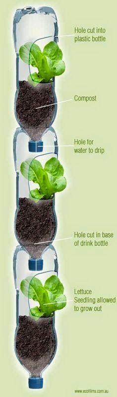 bouteille colonne, salade