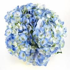 blue hydrangeas - Google Search