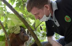 Saving Orangutans | Nights, 9:09 pm on 18 August 2014 | Radio New Zealand