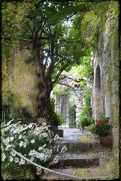 White flowers always look great in the shadows on the north side of the house.  (Eze Village, Provence , France)