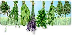 Varikosette Vértebra Cervical, Beijing China, Herbal Medicine, Herbalism, Free, Stockholm, Lithuania, Magazines, Bb