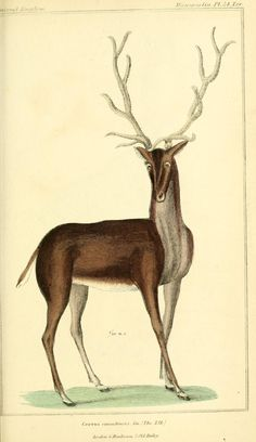 The animal kingdom, arranged according to its organization, serving as a foundation for the natural history of animals : and an introduction to comparative anatomy /  By Cuvier, Georges, baron, 1769-1832   Latreille, P. A. (Pierre André), 1762-1833  McMurtrie, Henry, 1793-1865  Genre Book  Publication info London :G. Henderson,1834-1837.