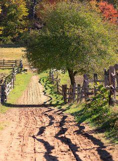 Tree Shadow Fence