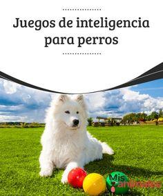Juegos de #inteligencia para #perros Así como nos #preocupamos de que nuestro amigo peludo realice suficiente actividad física, no debemos olvidarnos de que también ejercite su cerebro. Para ello existen #numerosos juegos de inteligencia para perros que tienen como #objetivo que el animal resuelva problemas y obtenga así una recompensa.