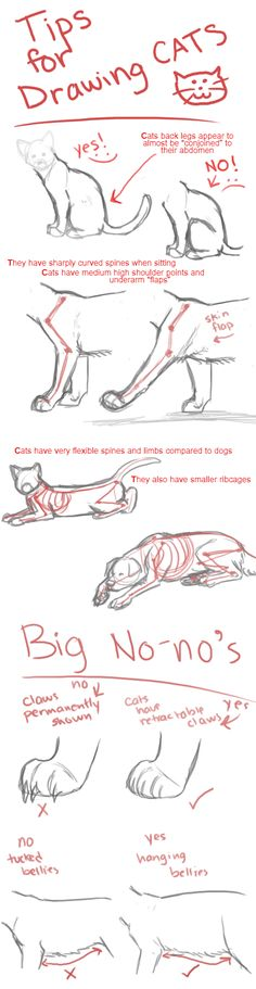 Drawing Cats Tips by Hiedidog More