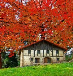 Photo By Jabi Artaraz. Red Tree, Basque Country, Photo Tree, France, Autumn Trees, Bilbao, 16th Century, My Favorite Color, Old Houses