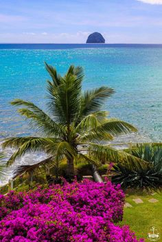 "Tropical Colors of ""le Diamant"" Martinique"