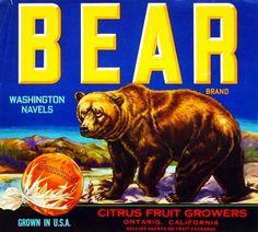 Bear Citrus Fruits. #crateart
