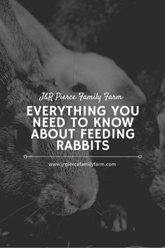If you're thinking about raising rabbits, these helpful tips will teach you how to feed them.  #howtofeedrabbits #rabbitfeedingtips #howtoraiserabbits #farmrabbitstips #raisingrabbittips #farming #homesteading Raising Rabbits, Farm Projects, Growing Vegetables, Helpful Tips, Farming, Need To Know, Urban Homesteading, Teaching