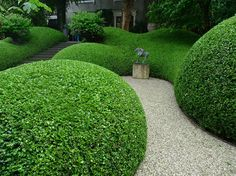 Huge hedges of perfectly sculpted privet swept down the garden and pooled at the bottom in big fat blobs.