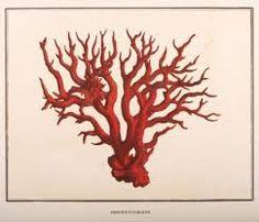 Image result for red coral Nautique Vintage, Art Du Collage, Images Vintage, Natural Curiosities, Nautical Art, Antique Illustration, Coastal Art, Kare Design, Beach House Decor