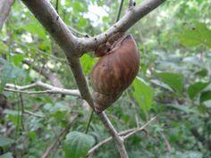 Caracol en una rama de un árbol