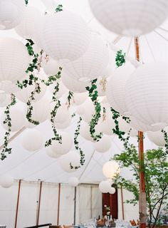 White lanterns with trailing vines. Photo: Depict Photography
