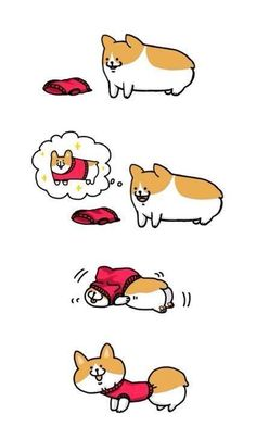 Haha this is actually how it works with a corgi, too! #puppy #dog #funny