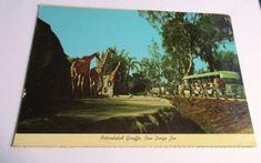 Giraffe Postcard Vintage San Diego Zoo California Giraffes
