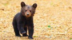 Image result for bear