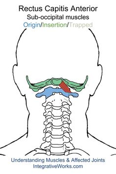 Acupressure Migraine oit-rectus-capitis-lateralis More - Clinical experience reveals that pain at the base of the head with ear ache is usually caused by two other trigger points. By lifting our chin out to, for instance, study a computer screen, the atl… Neck And Back Pain, Neck Pain, Jaw Pain, Neck Exercises, Trigger Point Therapy, Muscle Anatomy, Trigger Points, Massage Therapy, Physical Therapy