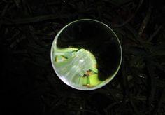 Græs, glaskugle og lygtepæl