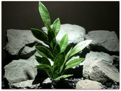 Plastic Aquarium Plants | Bay Leaf | Pap090 | Ron Beck Designs