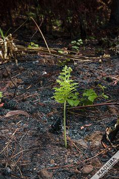 Nature is fighting back. Photo by Don Amaro (donamaro)