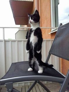 Overly Cute Cats That'll Make You Jealous You're Not Their Owner - Adorable Cats and Cute Kittens - Katzen Cute Funny Animals, Funny Animal Pictures, Cute Baby Animals, Funny Cats, Cute Animal Humor, Funny Images, I Love Cats, Crazy Cats, Cool Cats