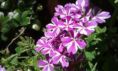 My Loveletter to Jesus: Tenderness Hallo dear ones, The Lord showed me tw. Trials, Lord, Garden, Garten, Lawn And Garden, Gardens, Gardening, Outdoor, Yard