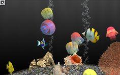 Fish&jellys