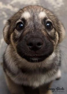 Just in case you haven't smiled yet today ❤️ Dog love Cute Baby Animals, Animals And Pets, Funny Animals, Nature Animals, Rottweiler, I Love Dogs, Animals Beautiful, Beautiful Dogs, Beautiful Images
