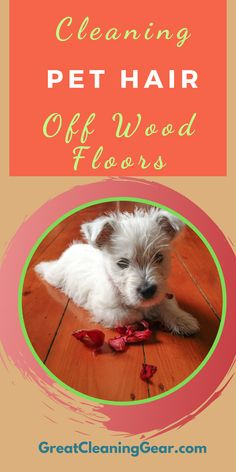 hardwood flooring Cleaning Pet Hair Off Wood Floors. There are plenty of different products you can choose from including traditional brooms and hardwood vacuums. These are the most popular methods used for cleaning dog hair off hardwood floors with ease. Cleaning Laminate Wood Floors, Vacuum For Hardwood Floors, Best Upright Vacuum Cleaner, Stain Remover Carpet, Stain Removers, Pet Hair Removal, Pet Urine, Diy Stuffed Animals, Robot